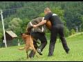 Rekvalifikace, školení pro ostrahy se psy a strážné