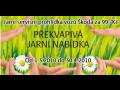 Jarní servisní prohlídka vozů značky Škoda za 99,-