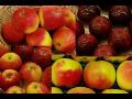 Výkup ovoce, prodej konzumních, sadbových brambor Prostějov, Olomouc