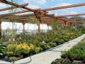 Zahradní centrum, prodej květin, okrasných a ovocných rostlin, hnojiv, substrátů Vsetín