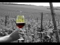 Vinařství na jižní Moravě
