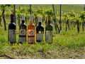 prodej kvalitnícho vína Velké Pavlovice