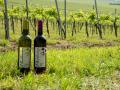 prodej sudových vín Velké Pavlovice