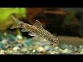 Okusov�n� rybi�kami Garra rufa, ryb� pedik�ra, l��iv� rybky, lupenka, relaxace, l�ze�, liberec,jablonec,turnov,semily,�esk� l�pa,