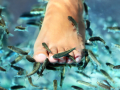 Okusov�n� rybi�kami Garra rufa, ryb� pedik�ra, l��ba lupenky, ekz�m�, relaxa�n� p��e o nohy, cel� t�lo liberec,mlad� boleslav