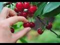 Pěstování a prodej ovoce Strachotín, Břeclav