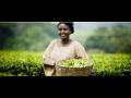 Fairtrade �esko a Slovensko Marketingov� organizace pro �R