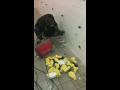 Nejen čištění kanalizace - havarijní služba (České Budějovice)
