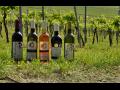 Svatomartinská vína 2014 z vinařství Velké Pavlovice