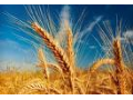 Rostlinná výroba, obilniny Valtice