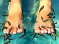 Rybky rybi�ky Garra rufa, ryb� pedik�ra, p��e o nohy, okusov�n�, liberec