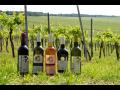 vína z Pavlovína  Velké Pavlovice