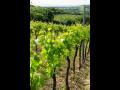 nabídka červených, bílých, odrůdových, jakostních a přívlastkových vín Velké Pavlovice