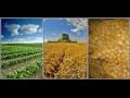 Zemědělství, pěstování zemědělských produktů,  zemědělská výroba Valtice
