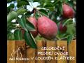 Prodej sezónního ovoce Znojmo