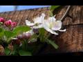 listnaté keře, růže, trvalky prodej Praha