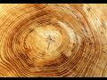 lesnictví Praha, prodej štěpků a dřeva