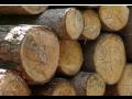 kácení a průklest stromů, odborné ošetření dřevin