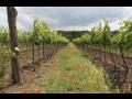 vina�stv� a vinn� sklepy Valtice