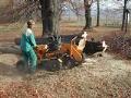 Sadové, parkové úpravy, realizace a poradenství v oblasti zahradnických služeb