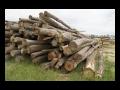 Bearbeitung und Verkauf von Brennholz Bezirk Mistelbach