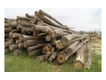 Verkauf und Zufuhr von Rohholz und Brennholz Horn