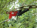 Rizikov� k�cen� strom� stromolezeckou technikou Praha