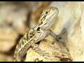 Chov, rozvoz zvířat pro maloobchod, činčila barevná, suchozemské želvy