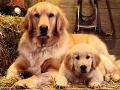 Internetový prodej (e-shop) s krmivy pro psy, kočky, exoty Opava