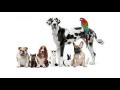 Krmiva a chovatelsk� pot�eby pro ko�ky, psy, hlodavce, pt�ky
