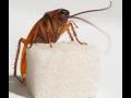DDD servis-deratizace, desinsekce, hubení hlodavců, hmyzu