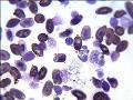 Veterin�rn� odd�len� parazitologie Jihlava
