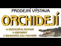 Prodejní výstava orchidejí, České Budějovice
