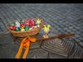 Velikonoce Olomouc - velikonoční trhy, řemeslný a farmářský jarmark
