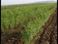 Šlechtitelská stanice, výroba a prodej osiva, ovocných stromků