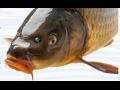 Prodej přípravky pro výrobu vnadících směsí pro ryby, směsi pro sportovní rybolov