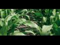 Semena slune�nice prodej