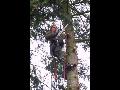 Kácení stromů, výškové práce, parkové úpravy