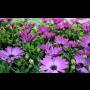 Zahradnictv�, prodej �ezan�ch kv�tin, okrasn� rostliny Brno