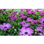 Zahradnictv�, prodej kv�tin, rostlin Brno