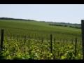 Výroba a prodej kvalitních přívlastkových vín z vinařtví na jižní Moravě