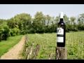 Kvalitní vína jižní Morava