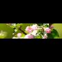 růže, stromky Brno-venkov