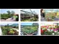 Zahradnictví Dubany nabízí květiny i rostliny všeho druhu