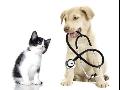 Zv�rol�ka�, o�kov�n� ps� a ko�ek, veterin�rn� ordinace s p��telsk�m a pozitivn�m p��stupem