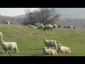 Chov ovc� - L�pa u Zl�na