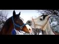 Letní dětský, příměstský tábor u koní pořádá Biofarma Zlín-Březová