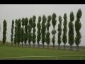 V�sadba strom� a �dr�ba nov�ch stromo�ad� - Praha - z�pad - n�vrh technologie i realizace p�esazen�