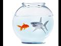 Kurzy řízení rizik pro manažery všech firem