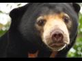 ZOO Ústí nad Labem chová i medvědy